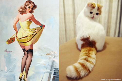 cat pinup girl