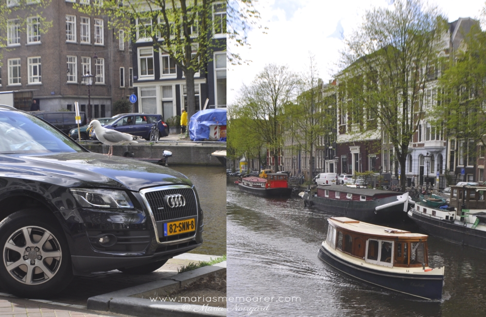 canal boats and crazy birds in Amsterdam