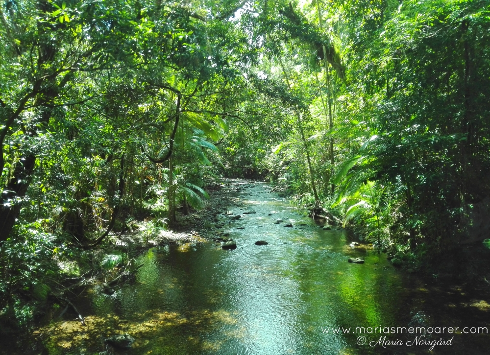 Daintree rainforest national park, Queensland, Australia