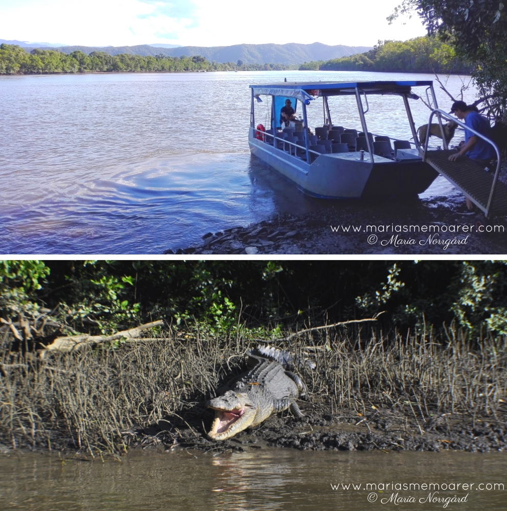 Things to do in Queensland, Australia: Daintree river cruise to watch salt water crocodiles