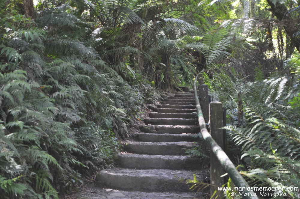 Kokoda Track Memorial Walk - 1000 Steps, Dandenong Ranges