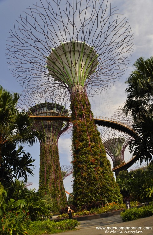 supertree vertical garden in Gardens by the Bay, a must see in Singapore