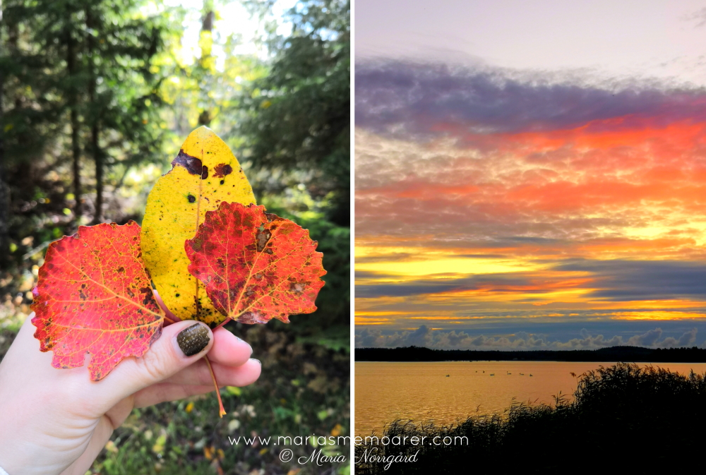 autumn colours - leaves and sunset