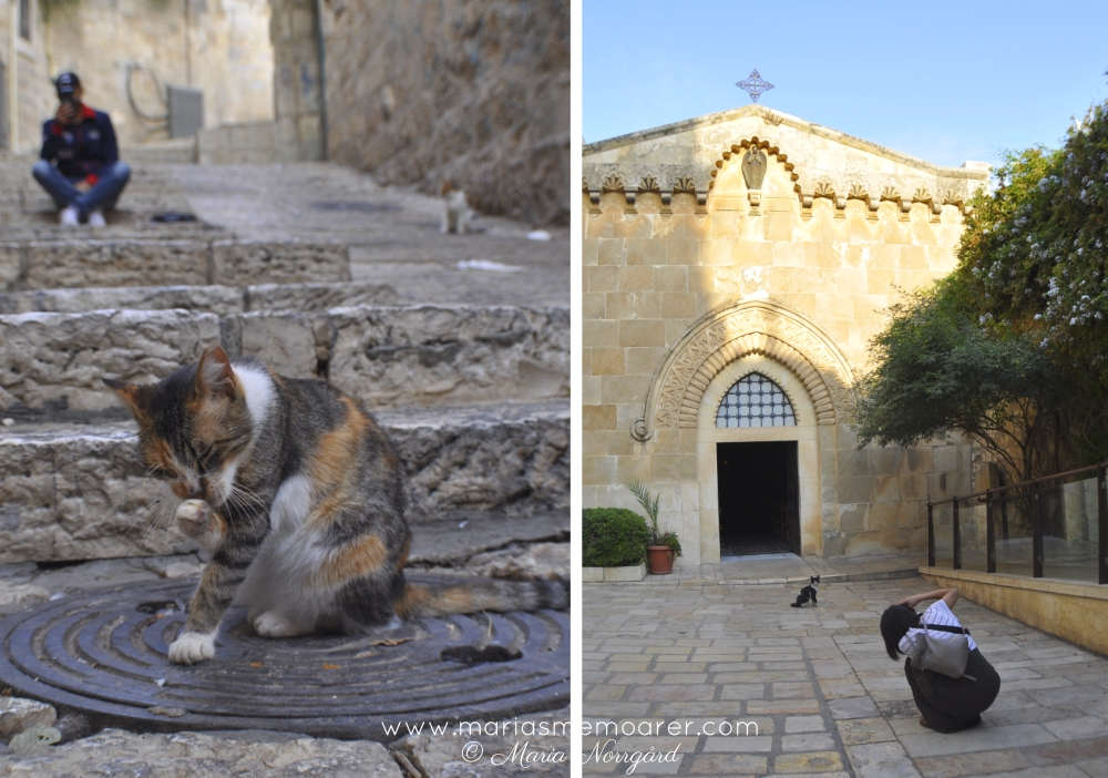 cats of Jerusalem (Israel / Palestine)
