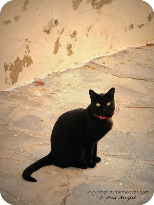 black cat in Tenerife / svart katt på Teneriffa