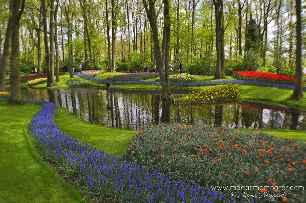 Keukenhof blomsterpark, Holland / Keukenhof flower park in Netherlands