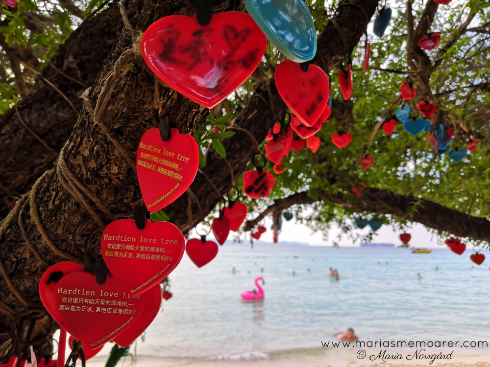 love trees on Tien Beach, Koh Larn Pattaya, Thailand