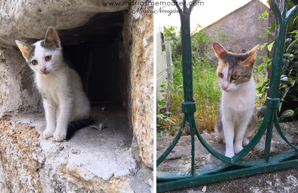 Cats in Mostar, Bosnian - balkan cats