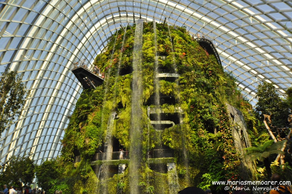 sevärt i Gardens by the Bay Singapore - växthuset Cloud Forest