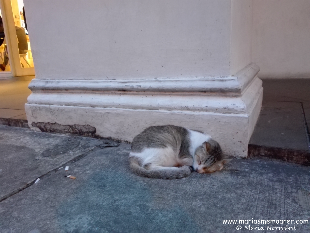 straycat of Little India, Singapore / hemlös katt eller gatukatt