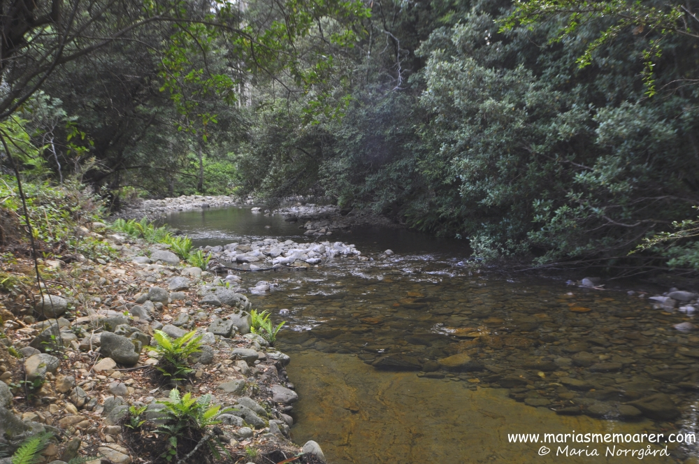 Liffey River in Tasmania has perfectly drinkable water