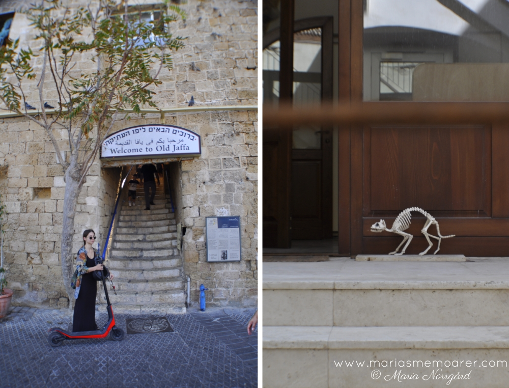 Old Jaffa entrance and cat skeleton in Tel Aviv / Gamla Jaffa och kattskelett