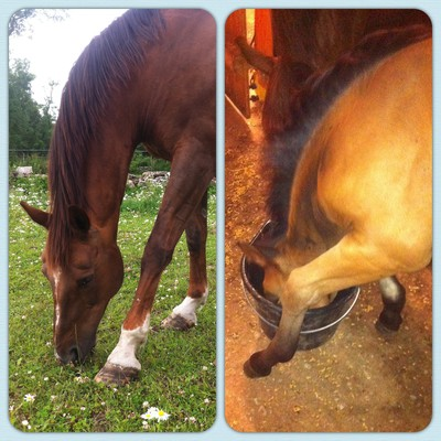 Horse and foal eating
