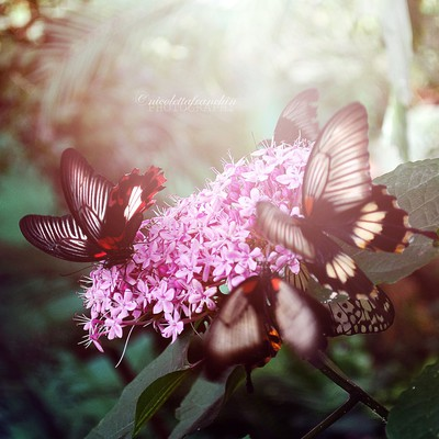 Butterflies in the morning