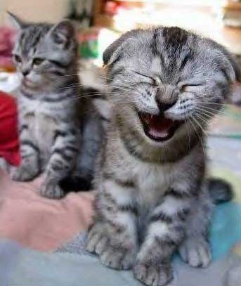 Laughing-cat.