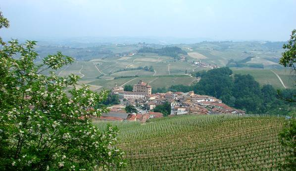 Wine yards near Alba, Piemonte