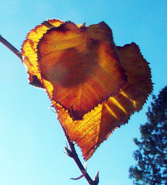 Autumn leaves against sun