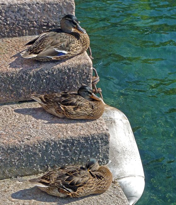 Duckstairs