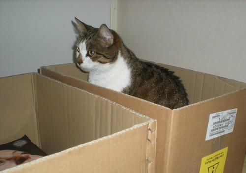Cat-in-box.