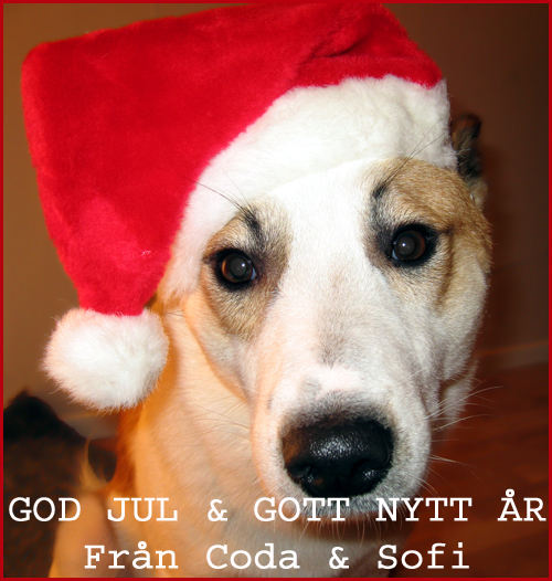 GOD JUL Från Coda & Sofi