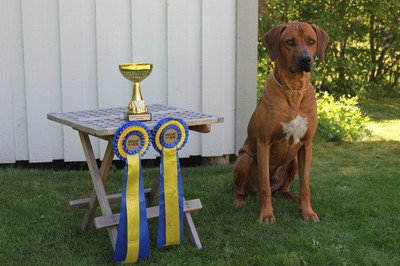 CAC-Winner Best Open Male:  Skallbjörnens Almighty Leo  (only cq to Open-, Champions & veteran  En lycklig gammel matte