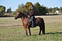Fantastiska hästar