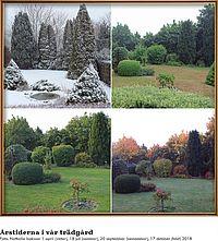 Årstiderna i vår trädgård