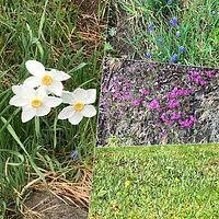Det växer och frodas i trädgården.